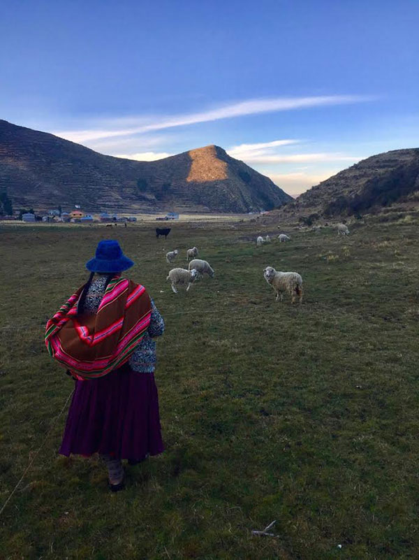 Photo of a woman herding sheep in Bolivia
