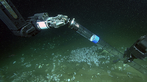 a pushcore is used to sample sediments among seep clams
