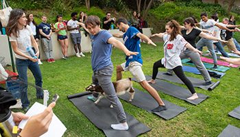 Goat yoga with students on the quad