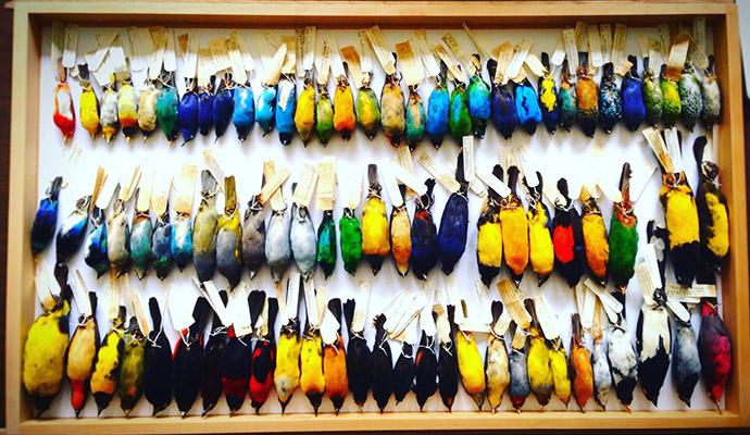 Moore Lab bird specimens