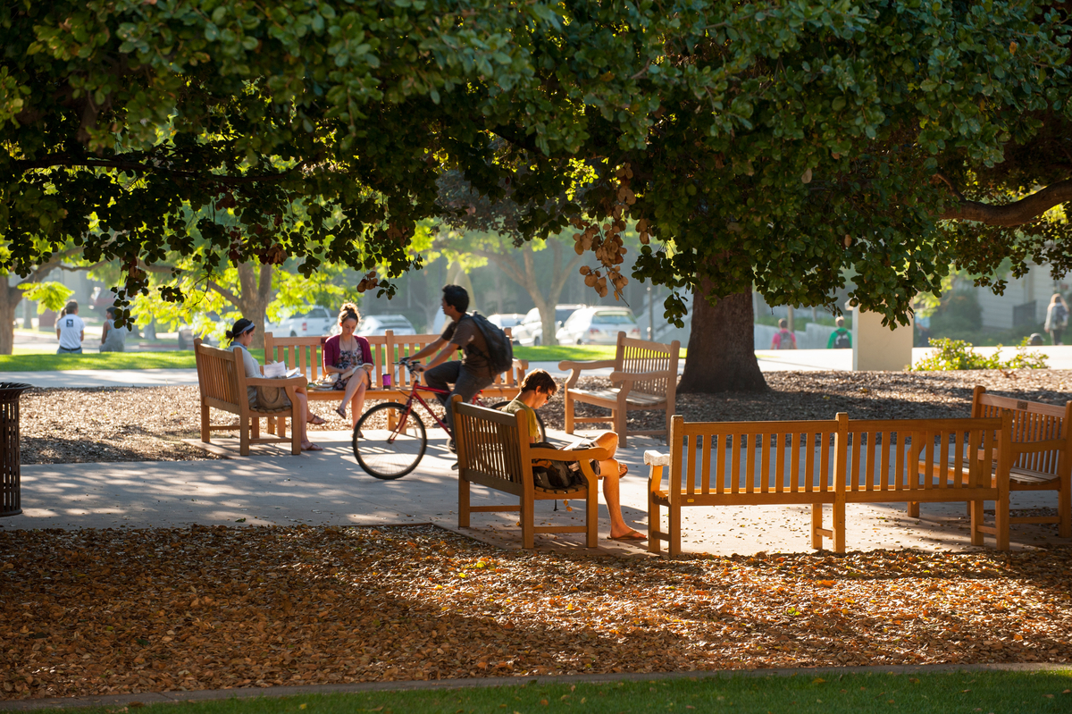 People sitting under the tree on the Academic Quad