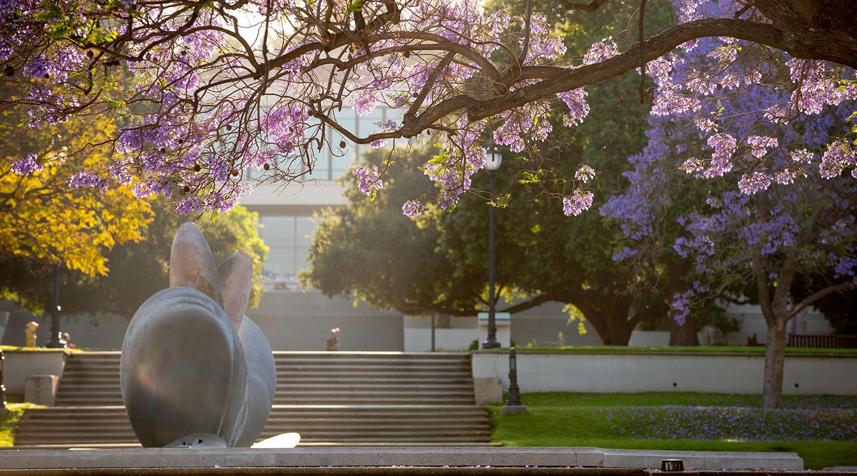 campus scene with jacaranda trees