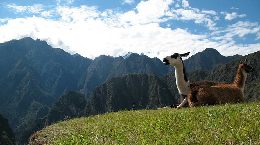 Two llamas sit in the Andean mountains