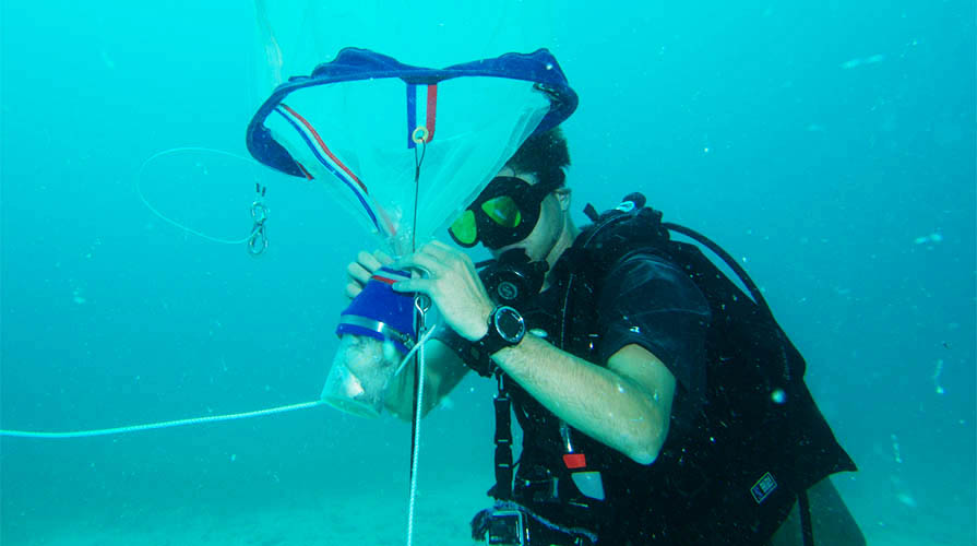 Student conducting marine research underwater