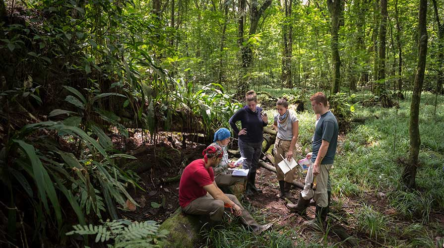 A professor and students in the field at La Selva Biological Station