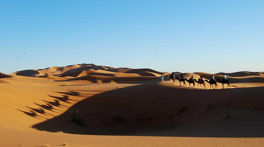 A caravan of camels in the desert