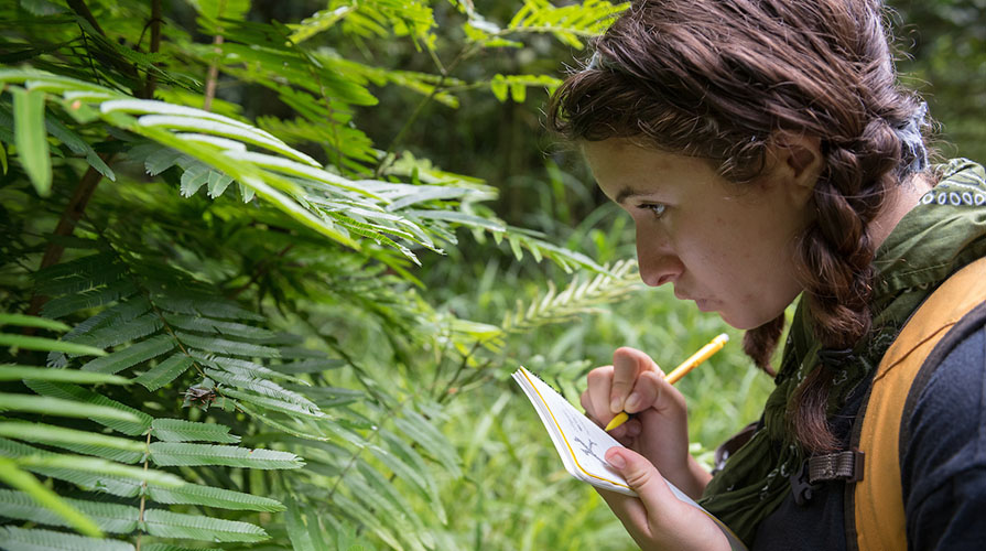 A student examines lush green ferns while writing intently in her notebook