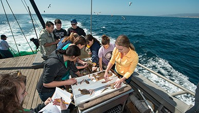 Marine Biology students examine specimens on a boat while seagulls fly overhead