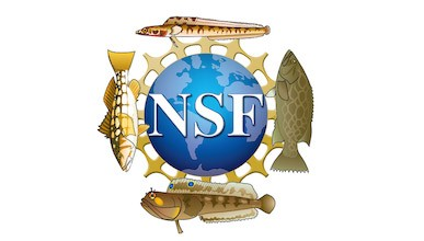The NSF logo overlaid on the VRG logo