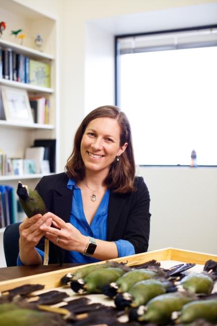 Allison Schultz with tanager specimens
