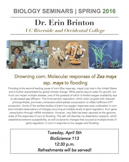 Image for Dr. Erin Brinton: Drowning corn: Molecular responses of Zea mays ssp. mays to flooding
