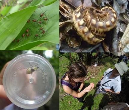 Image for May 26, 2014 - La Selva Biological Station