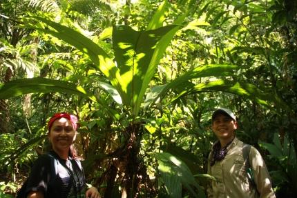 Image for May 25, 2014 - La Selva Biological Station