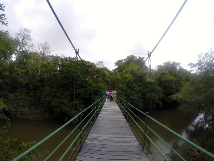 Image for May 23, 2014 - La Selva Biological Station