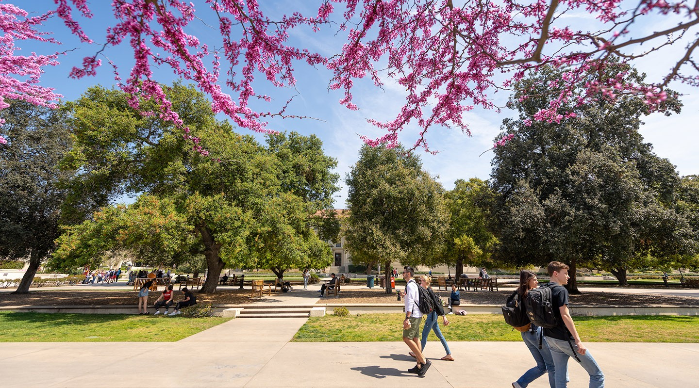 Students walk across the quad, framed by purple flowers