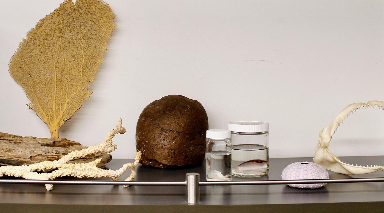 biodiversity collections specimens
