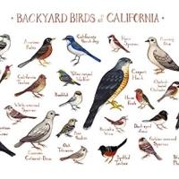 Calfiornia birds