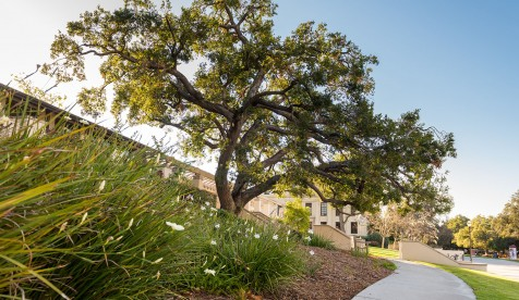 Campus view with tree