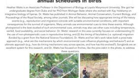 Image for Heather Watts: Environmental cues and the timing of annual schedules in birds