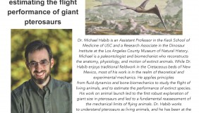 Image for Dr. Michael Habib - Real flying monsters: estimating the flight performance of giant pterosaurs