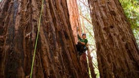 Claire Willing suspended from large tree doing research.