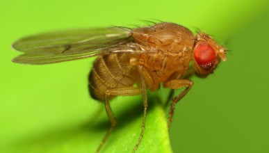 Drosophila on plant