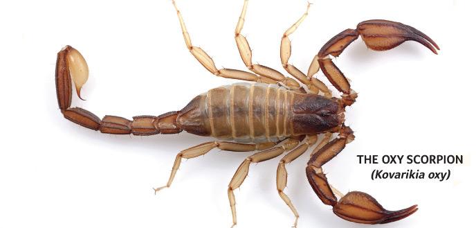 Spring18_Scorpion